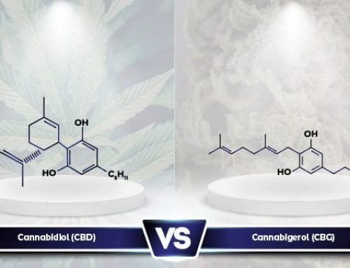 CBG vs CBD: What Are the Differences?